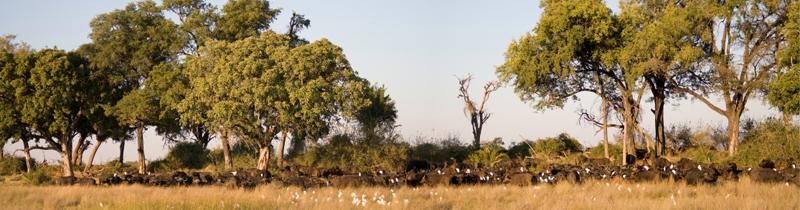 Erfolgreich-reisen.de - Länderinfos Botswana