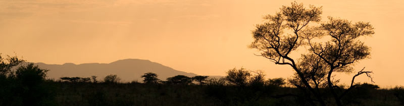 Erfolgreich-reisen.de  - Kenia - Abendsilhouette
