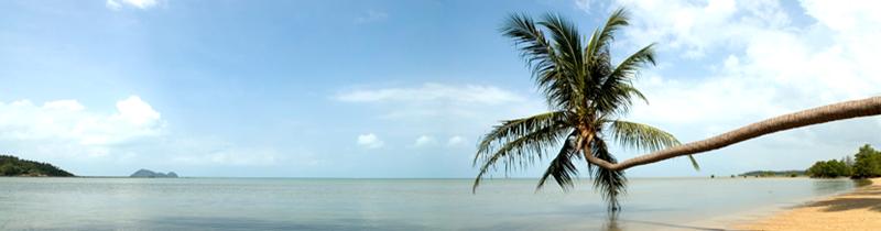 Erfolgreich-reisen.de - Länderinfos  - Madagaskar - Strandpalme