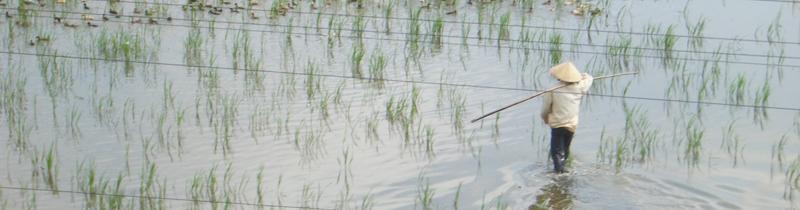 Erfolgreich-reisen.de - Länderinfos  - Vietnam - Reisfeld