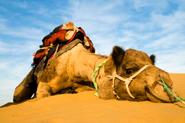 Reiseartikel Algerien