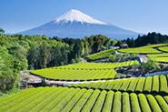 Reiseartikel Japan