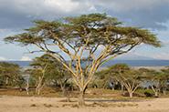 Reiseberichte Kenia