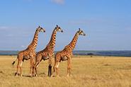 Reiseberichte Sambia