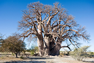 Reiselinks Botswana