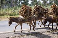 Reisevideos Äthiopien