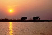 Reisevideos Botswana