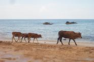 Urlaubsbilder Vietnam